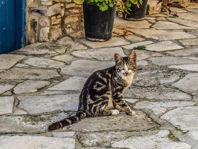 Кот гуляет по улице