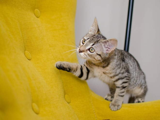 Любопытный кот лазит по дому