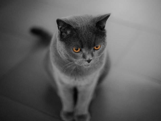Кот сидит на полу