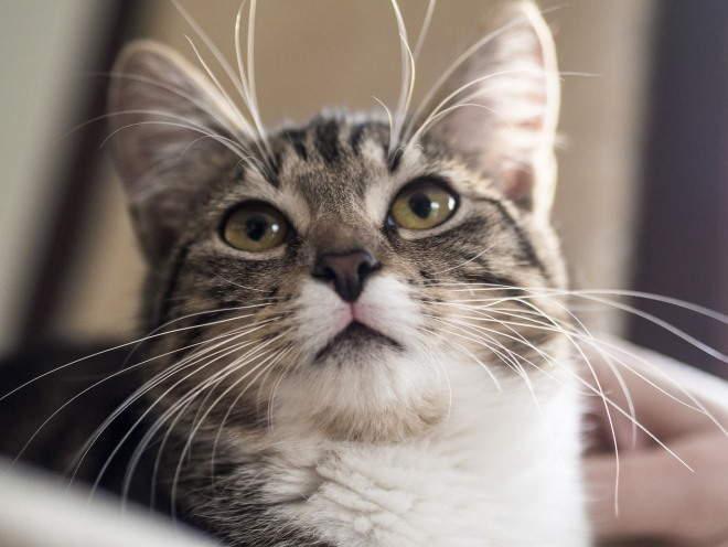 Кошка смотрит наверх