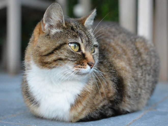 Кошка лежит на веранде