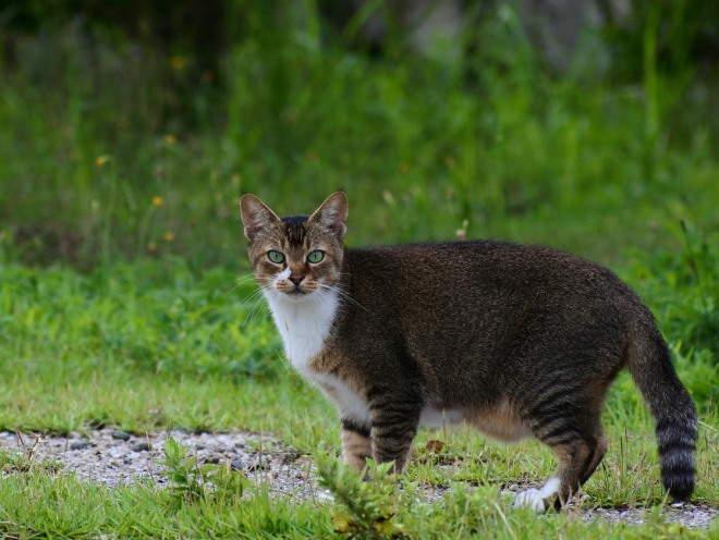 Кошка вышла гулять на улицу