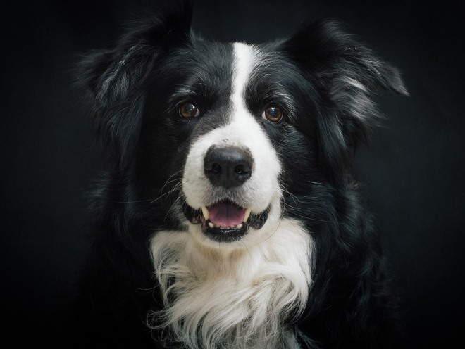 Собака смотрит в ожидании
