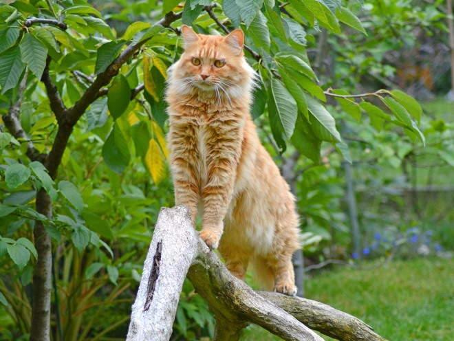 Кошка лазит по веткам