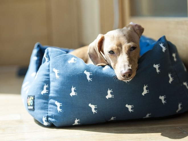 Собака отдыхает в лежанке