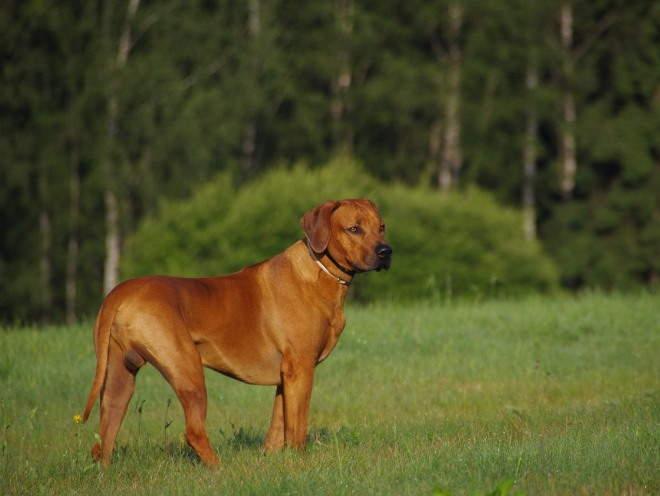 Собака бегает на природе