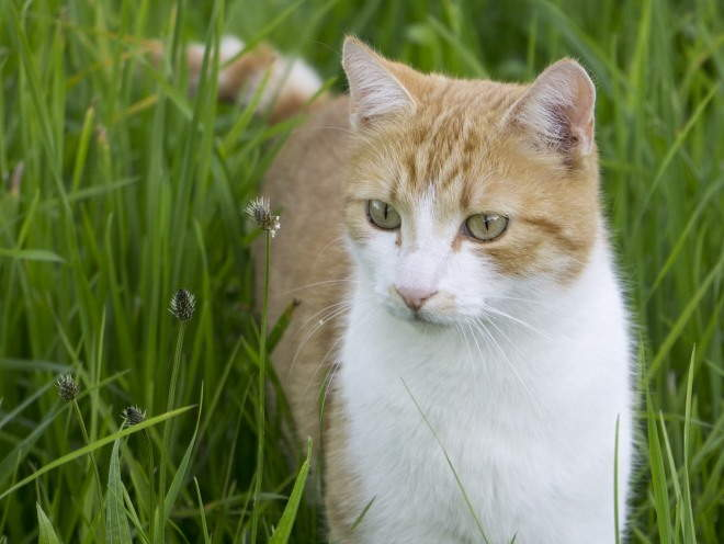 Кошка ходит среди травы