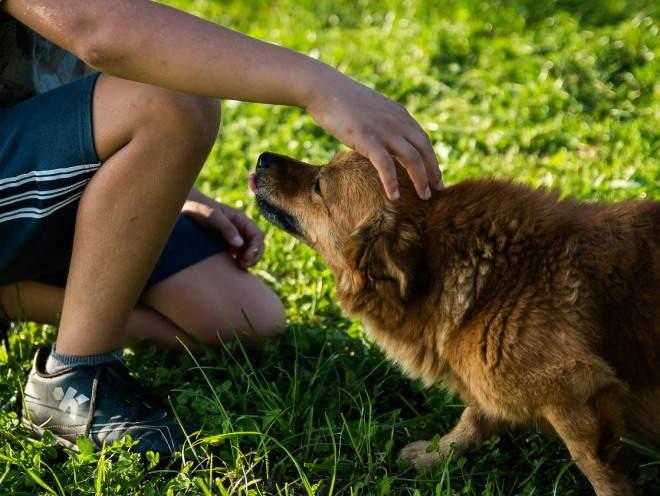 Почему собака боится людей и что делать