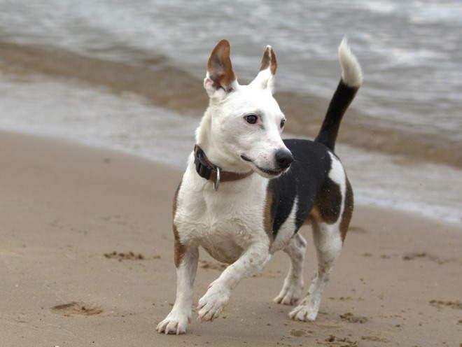 Собака бегает по песку
