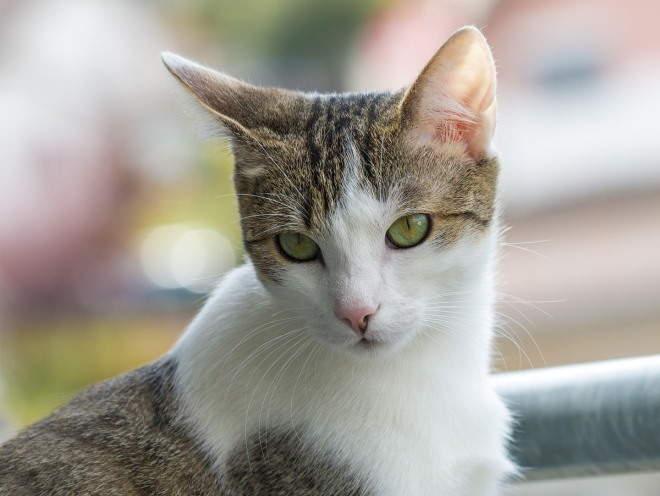 Кошка смотрит внимательно