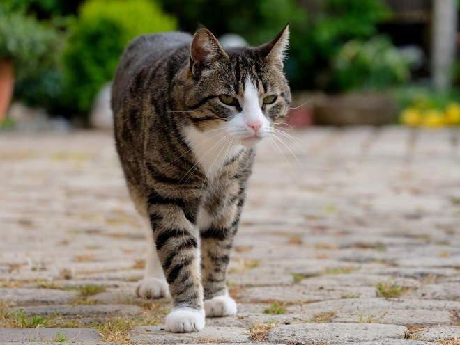 Кошка гуляет по улицам
