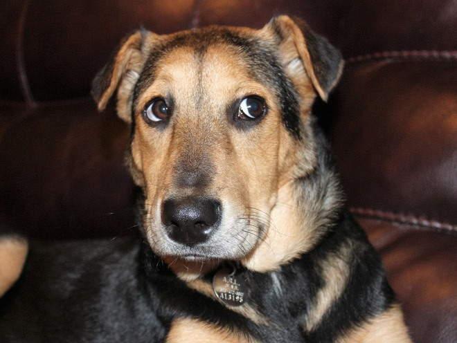 Собака забралась на диван