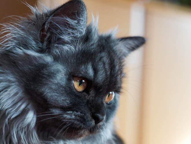 Кошка что-то увидела