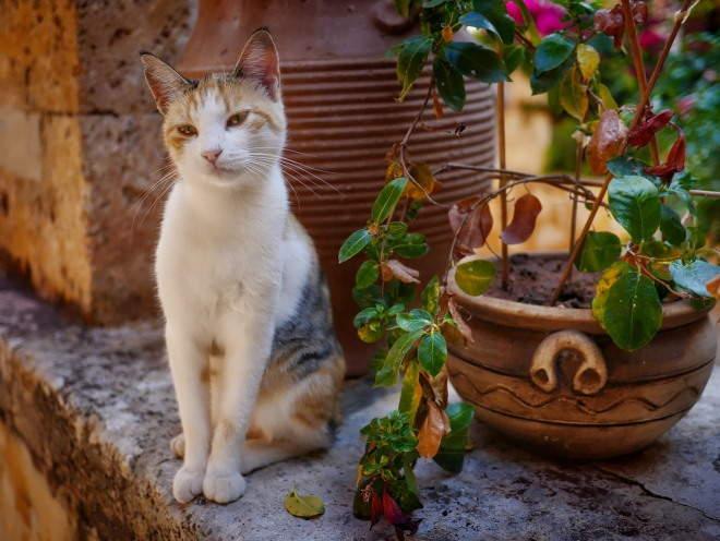 Кошка сидит на балконе у цветка