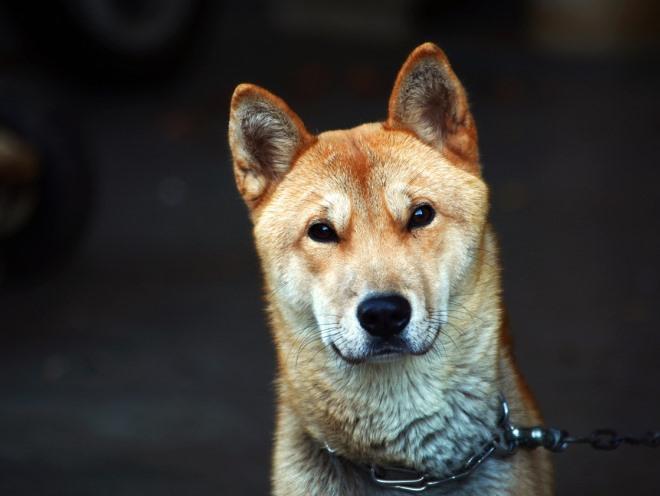 Собака настороженно смотрит