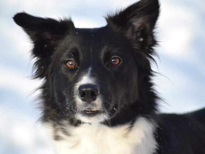 Собака гуляет в мороз