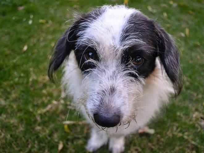 Собака сидит на траве и смотрит