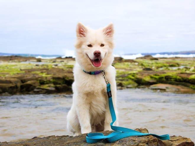 Собака гуляет у воды