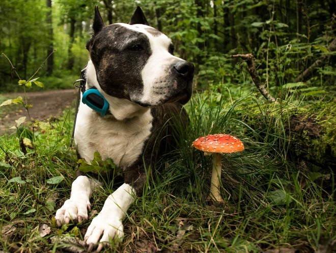 Собака лежит на поляне в лесу