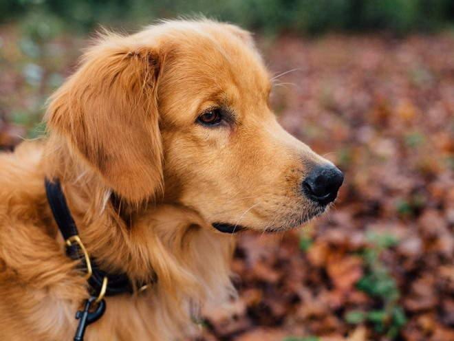 Собака гуляет в лесу