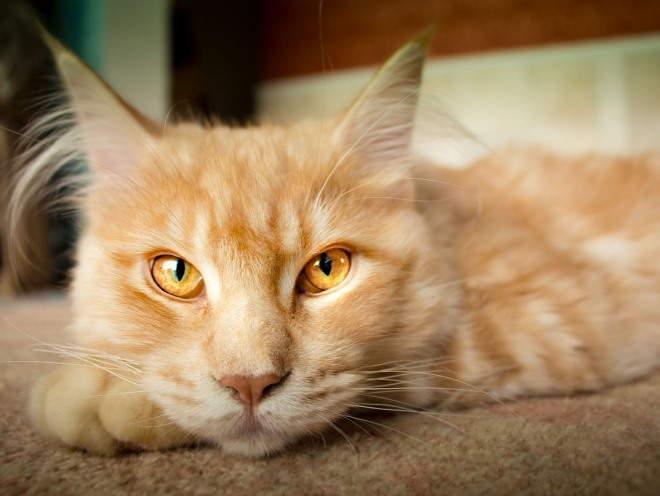 Кот отдыхает на полу