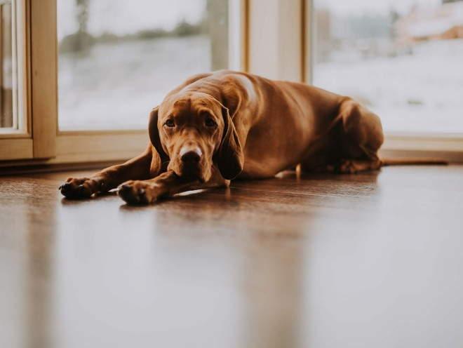 Собака лежит на веранде