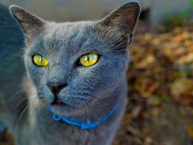 Кошка гуляет во дворе