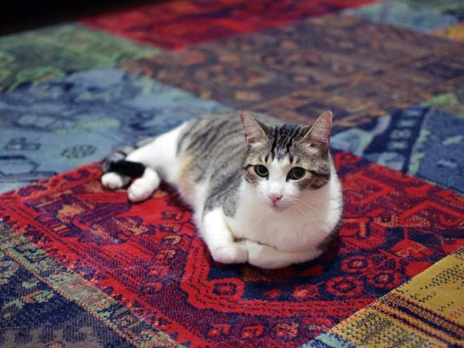 Кошка лежит дома на полу