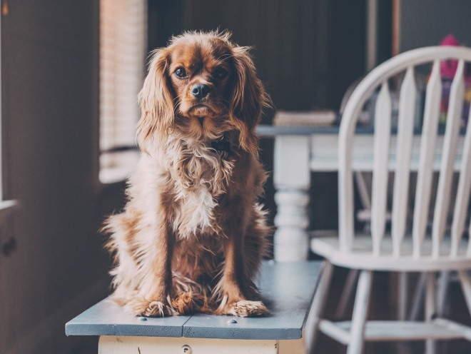 Собака сидит на кухне
