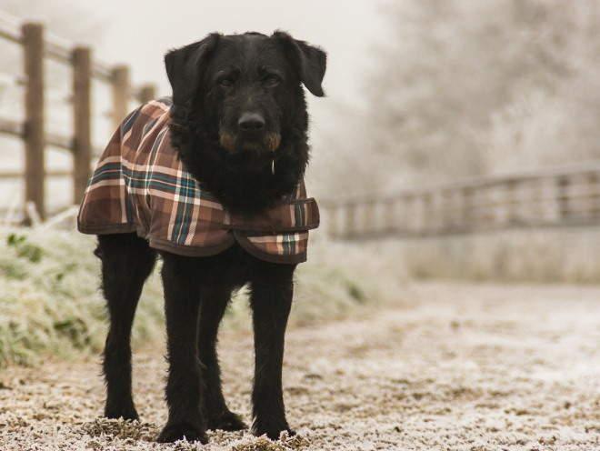 Собака гуляет на улице одетой