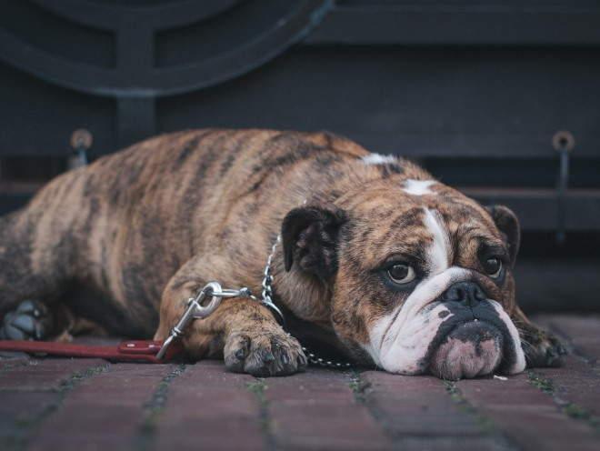 Собака лежит на улице грустная