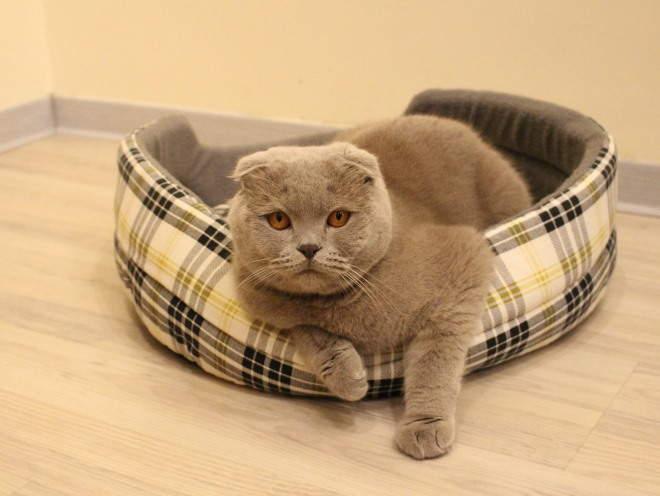 Кошка забралась на лежанку