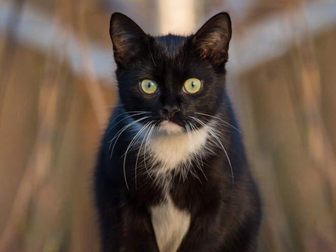 Кошка обеспокоенно смотрит