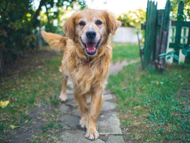 Собака гуляет в деревне