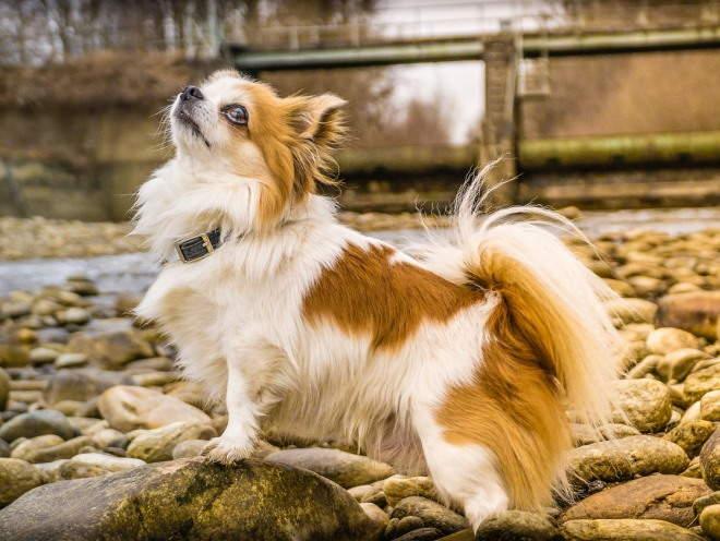 Собака стоит на камнях