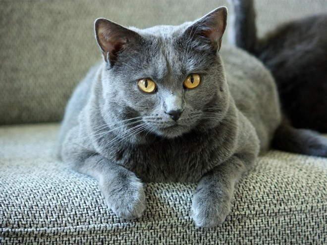 Кошка лежит на краю дивана