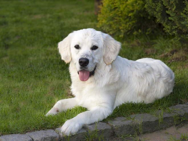 Собака отдыхает после игр на улице