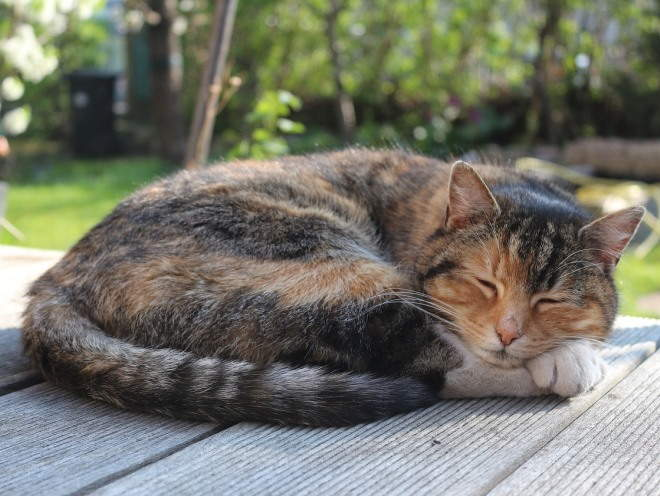Кот греется на солнце
