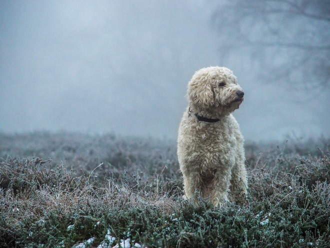 Собака гуляет в туманную погоду
