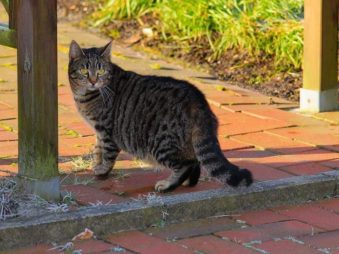 Кошка вышла на улицу