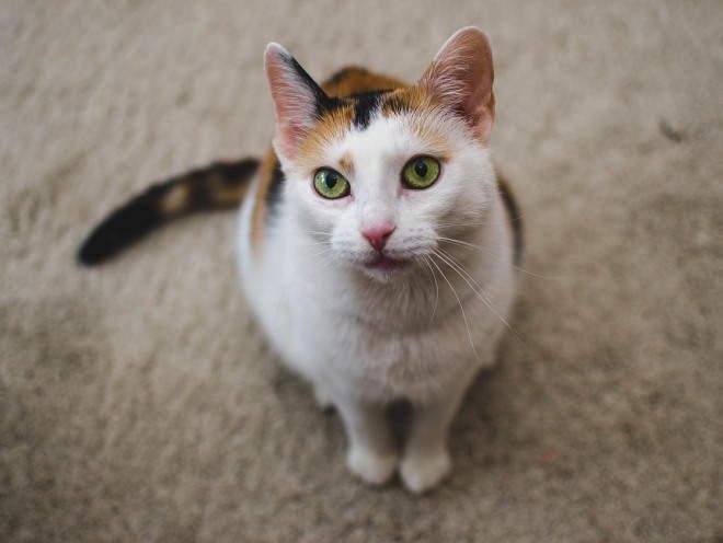 Кошка сидит на полу и внимательно смотрит
