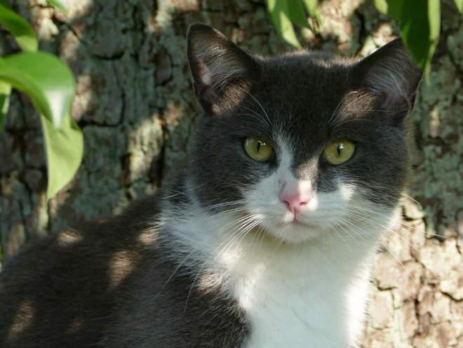 Кот сидит в тени