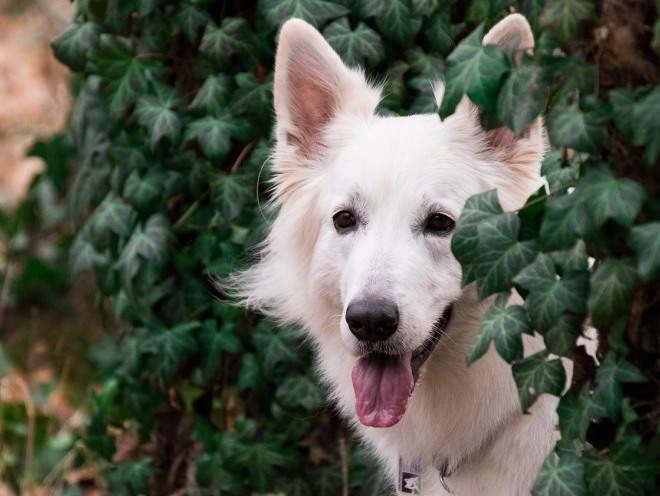 Собака стоит среди кустов