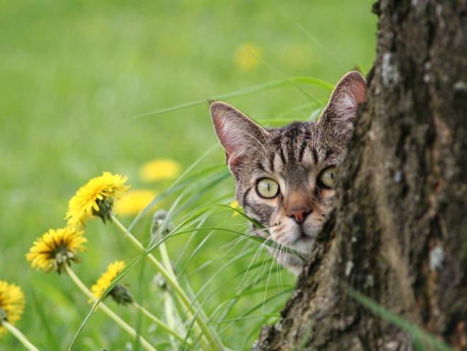 Кошка смотрит из-за дерева