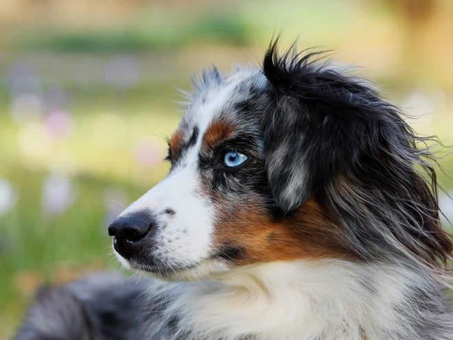 Собака увидела что-то на улице