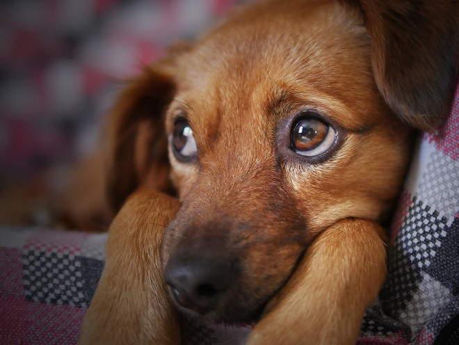 У собаки здоровые глаза