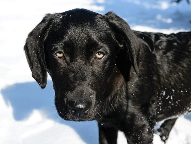 Собака бегает по снегу
