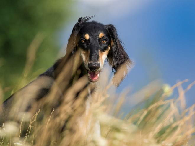 Собака сидит в траве
