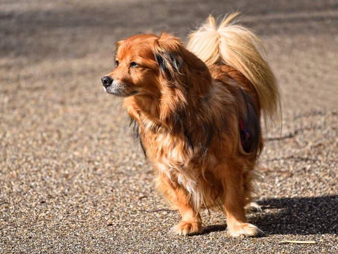 Собака греется на солнце