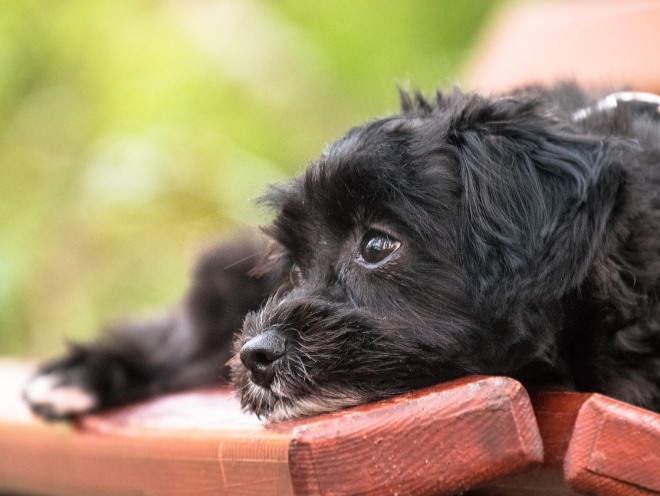 Почему собака может скулить и как ее от этого отучить